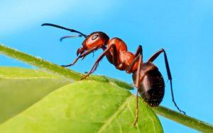 Cách ly xã hội ảnh hưởng đến loài kiến cũng giống như cách con người khi bị cô lập